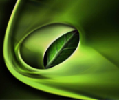 Ecofilm Industrial Biodegradable & Compostable Stretch Film